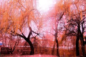 Red trees by megymaca