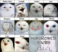 Mukurowl's Faces... by Xin-W