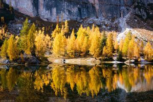 Golden October Reflection by Dave-Derbis