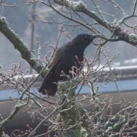 crow 2 by sacral-stock