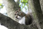 Squirrel by LunaticZorr
