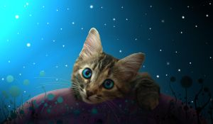 Spacey Kitty by shandab3ar