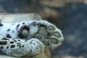 Leopard paws by James-Marsh