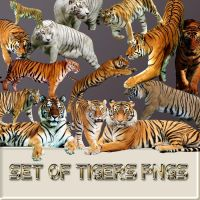 Set of tigers pngs by reven94