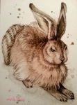 my duerer rabbit by ilinea