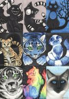 cat sketchcard aceos by vashley