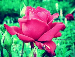 Rose are red... by cuteGaby