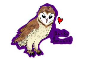 Blacky Barn Owl by Bloodstainedhowl