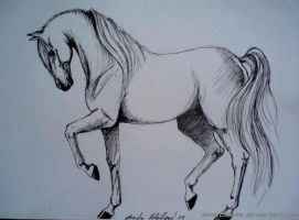 horse drawing from memory by Ennete