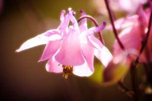 little flower in the light by LiNDBORG