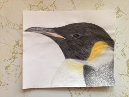Emperor Penguin by imagineBeyondReality