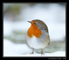 Snow Robin II by andy-j-s
