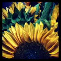 Sunflowers by tastybedsore