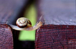 Snail The Traveller by nilsphotos
