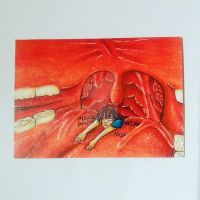 [ACEO AUCTION] [VORE] Getting swallowed... by Beccunda