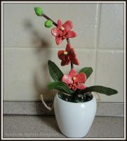 My orchid by MrsEfi
