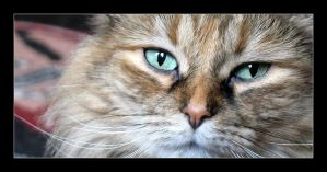 Cat eyes by MichelleMarie