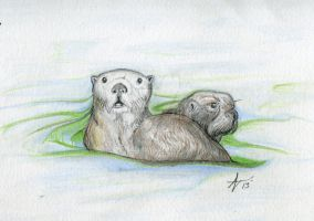 Otters by alexvontolmacsy