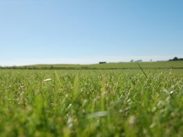 The Grass in the Field by ewensimpson