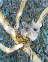 Amy Koala Family Watercolor by KenKreisel