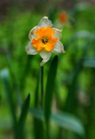 Lensbaby Flower 1 by Suinaliath