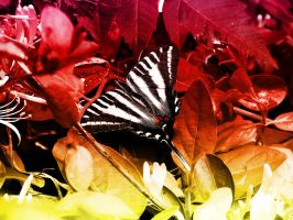Butterfly and the Flame Entry by Morna