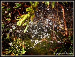 Stars of the Spiders by EuphoricPhotographs