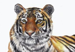 Prismacolor Tiger by ana-wandmaker