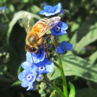 Bumble Bee Blues by AcceptedOutcast