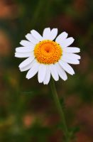 pushing daisy by arcignogatto