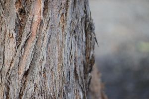 Tree Bark by CNStock