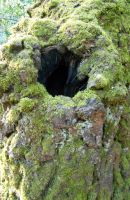 Stock texture - moss and knothole by rockgem