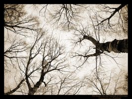 Gothic Trees by GMCPhotographics