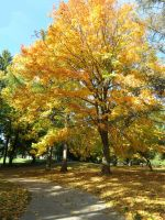 Along the Path of Fall by Michies-Photographyy