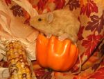 Golden Brown Mouse Plushie by Morumoto