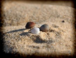 Three little clams by hydrocean