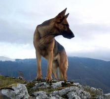 Dog by toccca