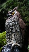 Carved Wooden Owl by PamplemousseCeil