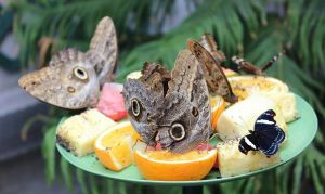 Butterflies Having a Snack by MadForHatters