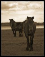 Cold-blooded Horses by d-minutiv