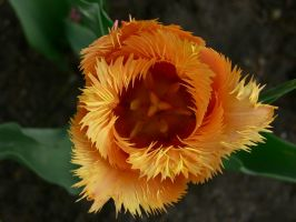 Flower by WoundedL1on