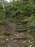 Forest steps 2 by mindCollision-stock