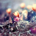 .. spring by BaxiaArt