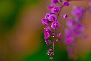 Raindrops on little flowers by wildfox76