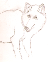 wolf drawing by gfgamer