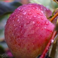 Raindrops on a Red Apple by Trezizi