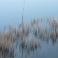 Water And Grass 1 by FiLH