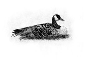 Canadian Goose by Feanor-the-Dragon