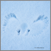 The First Snow Angel by Mogrianne