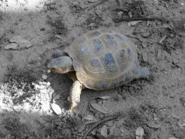 Hungry Tortoise by BlackFlameVampire